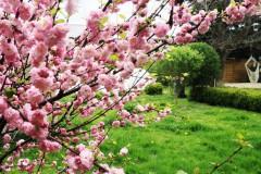Blütenpracht im Hofgarten