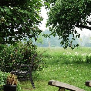 Galerie - Garten am Teich beim Apfelbaum und der Wiese