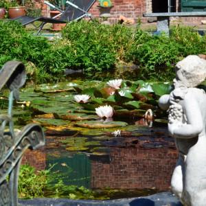 Galerie - Teich auf dem Landhof